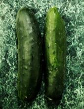 E.coli: Afinal, é mortal?